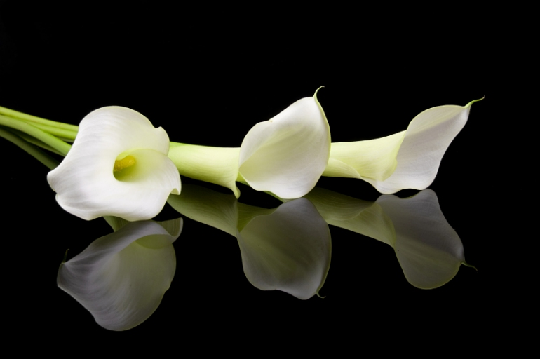 lillies-funeral-flowers.jpg
